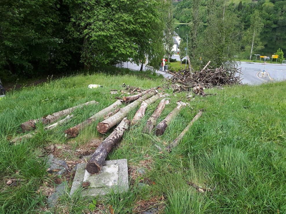 Planting tatt av vinden.Foto SolfridAksnes (2)